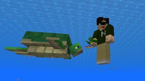 海草に注目するカメ