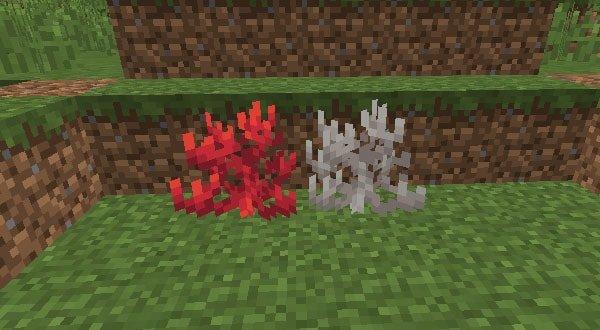 陸上のサンゴと死んだサンゴ