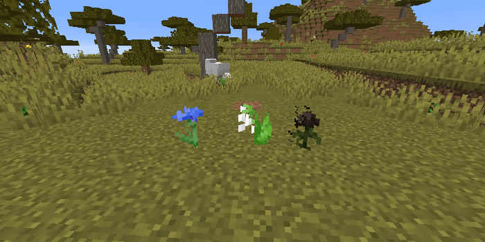 新しく追加された花