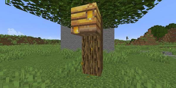 ハチミツがたまった巣