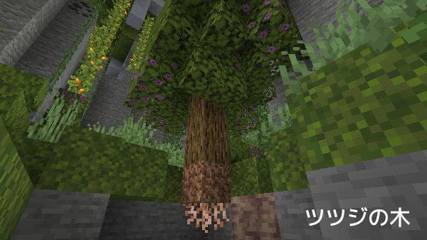 ツツジの木